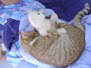 While Cats Like to Nap, Humans Need Sleep