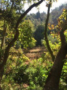 Magical woodlands